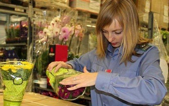 фитосанитарный контроль при ввозе растений в Беларусь