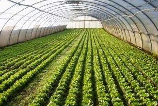 Сельское хозяйство Германии