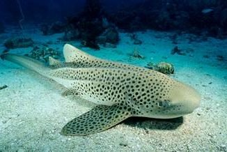 акулы в Тайланде