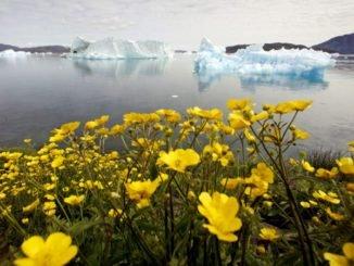 Растительность Гренландии