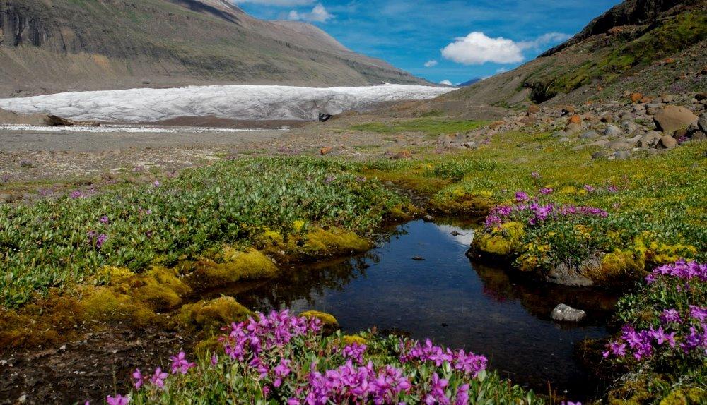 Типы растительного покрова Гренландии