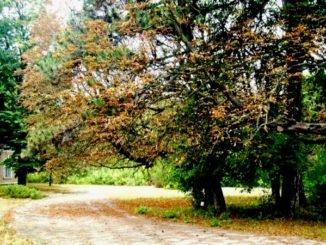 Цаульский парк в Молдове