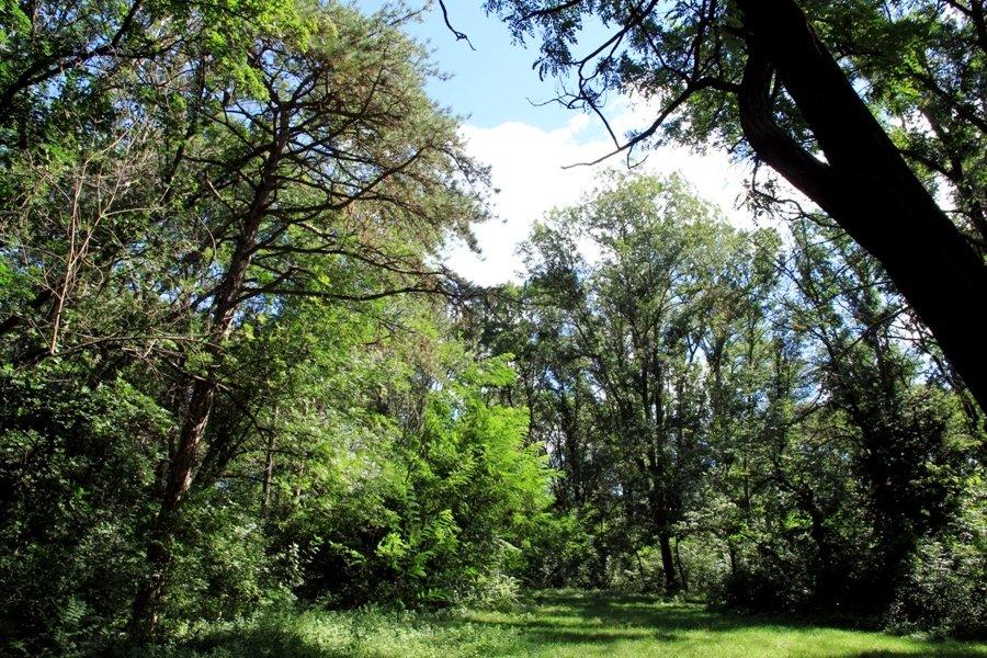 Парк в селе Стольничены