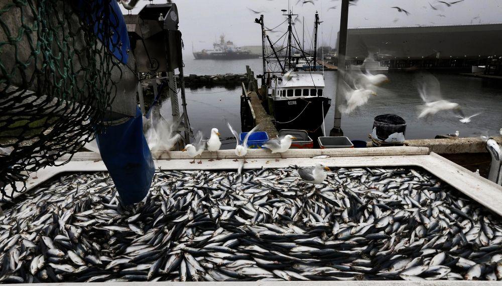 работа на рыбном заводе в Норвегии