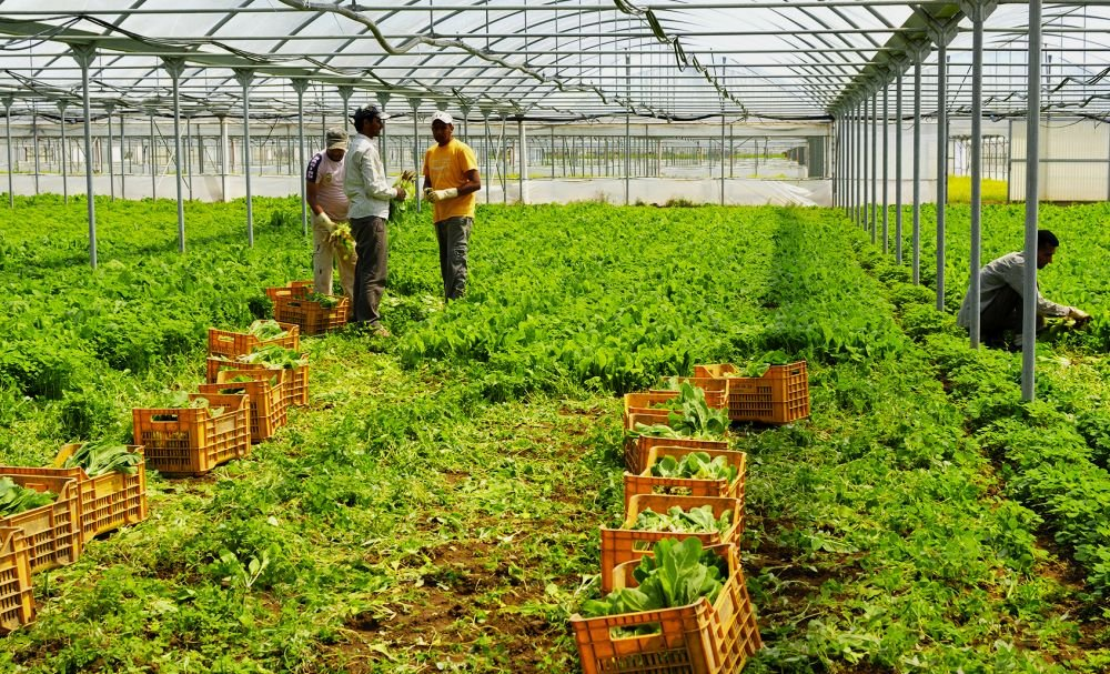 сезонная работа без знания языка на фермах